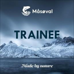 Trainee Måsøval